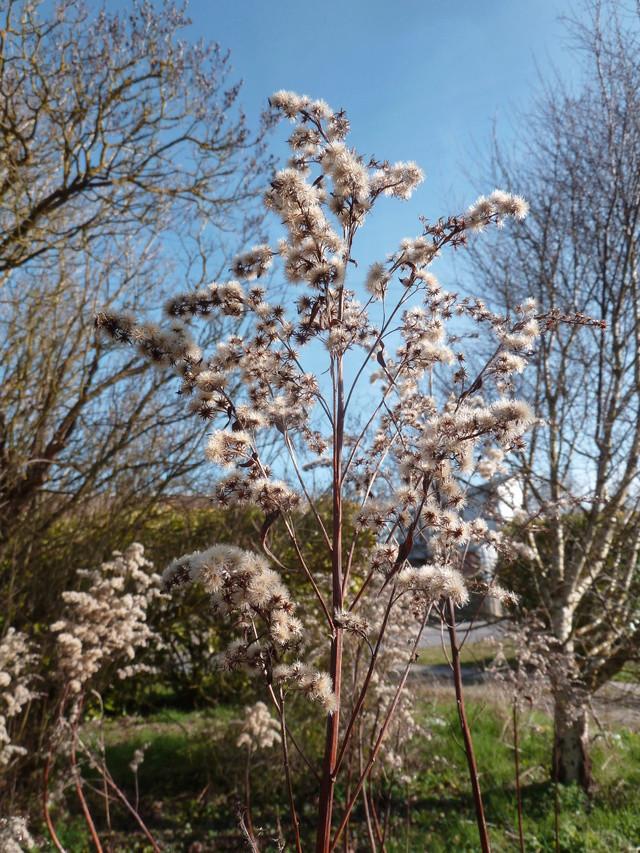 deux ou trois fleurs dans le vent - Page 4 P1280013