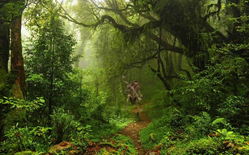 Kapitel 3: Gestrandet Jungle10