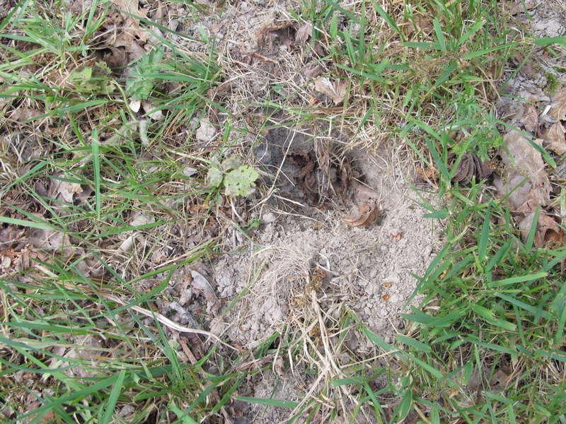 Des trous dans ma pelouse. Qui?! Trous_12