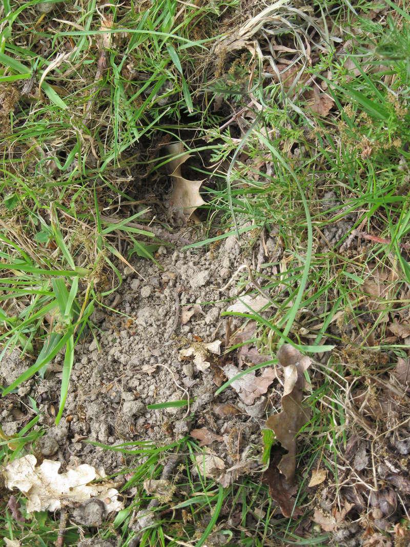 Des trous dans ma pelouse. Qui?! Trous_14