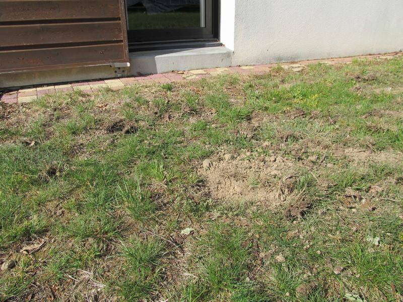 Des trous dans ma pelouse. Qui?! - Page 2 Trous_19