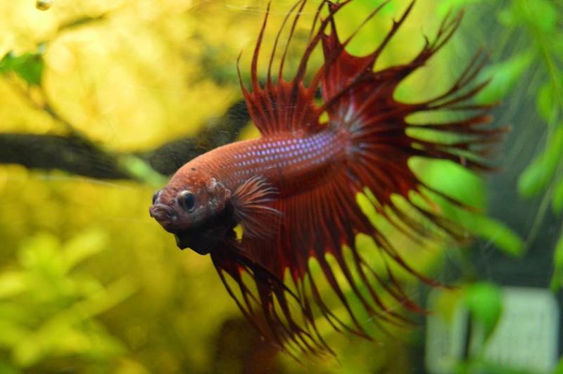 Futur aquarium pour Betta - Page 2 13343010