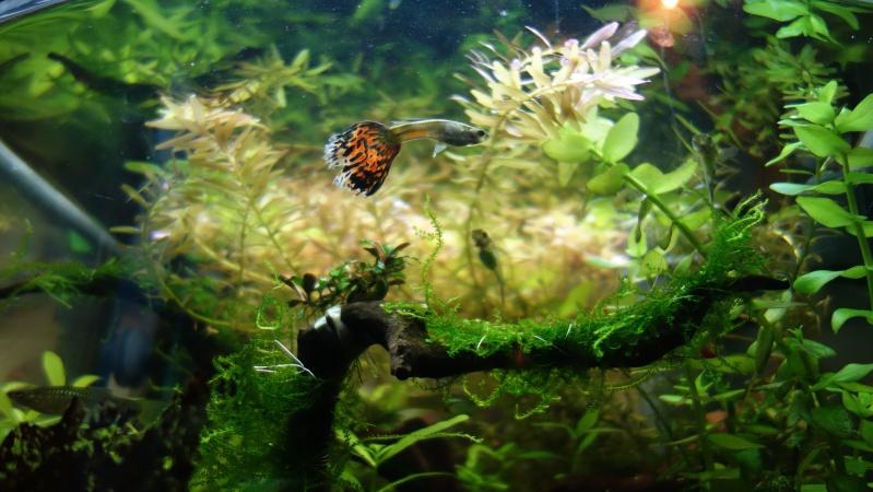 Mes Débuts dans l'aquariophilie; Juwel Trigon 190L - Page 2 Dsc00410