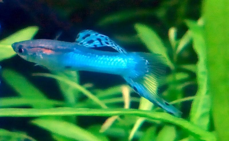 Mes Débuts dans l'aquariophilie; Juwel Trigon 190L - Page 2 P1140010