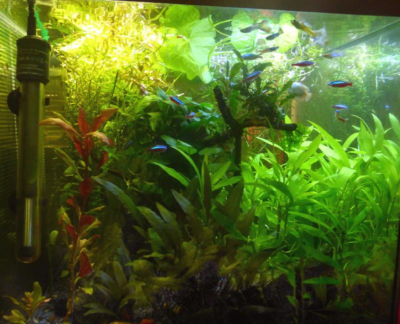 Les plantes bulle ? P1150110