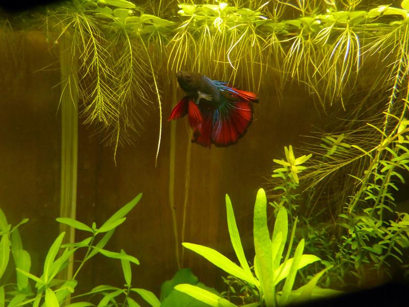 Futur aquarium pour Betta - Page 2 P1150410