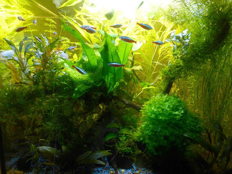 Petit aquarium 19 l pour crevettes P1160210