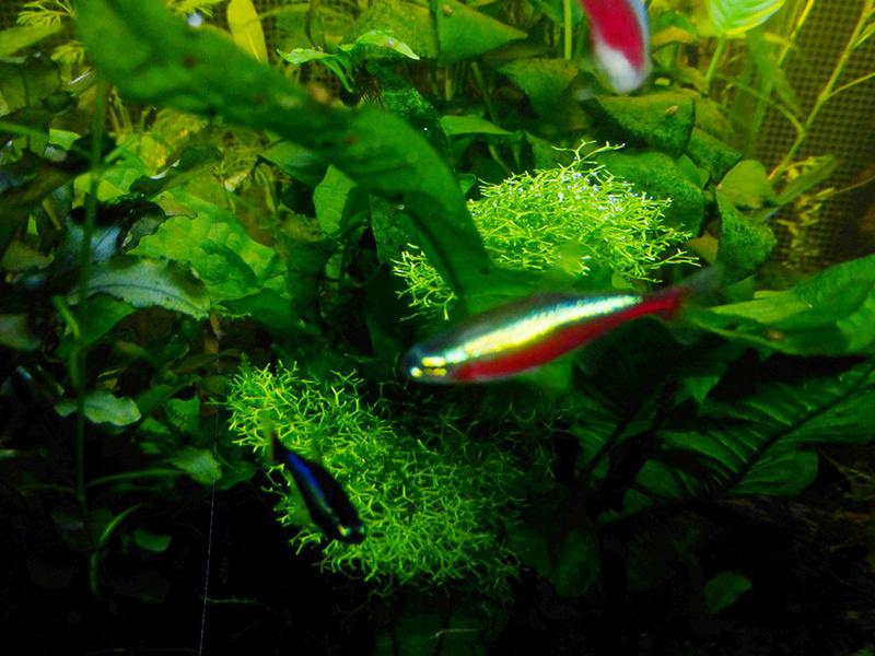 Petit aquarium 19 l pour crevettes P1160212