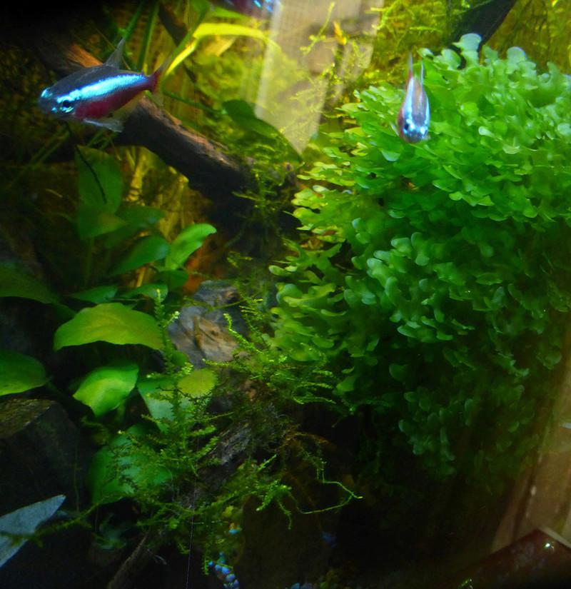Petit aquarium 19 l pour crevettes P1160213