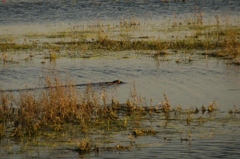 La sécherresse dans le marais ! 23_03_10
