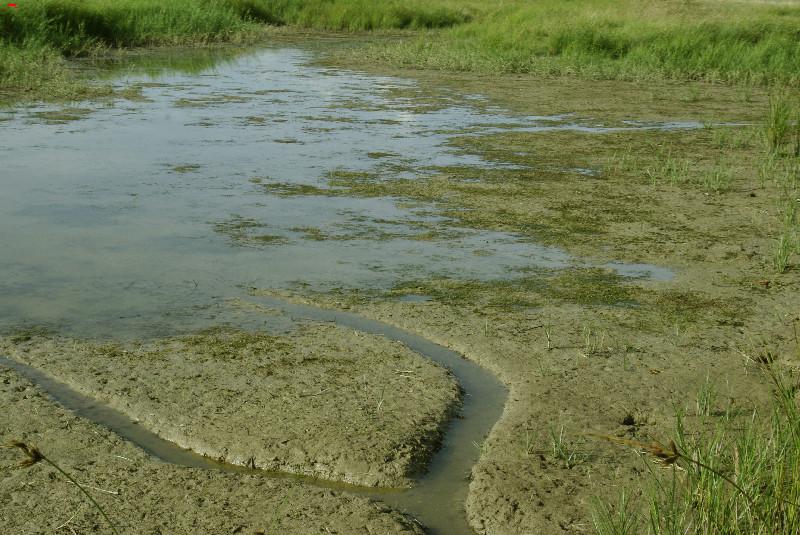La sécherresse dans le marais ! 27_06_10