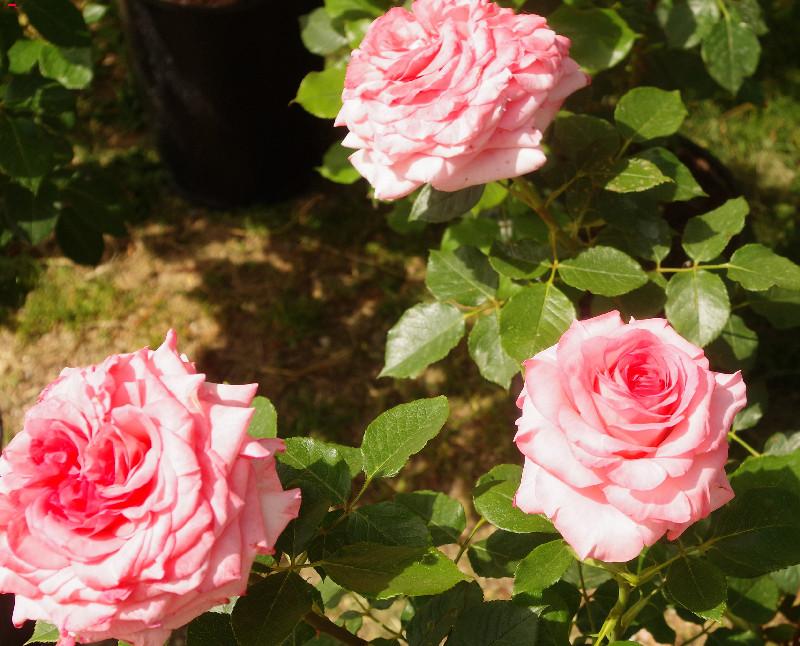 Rendez vous au Jardin Imgp1418