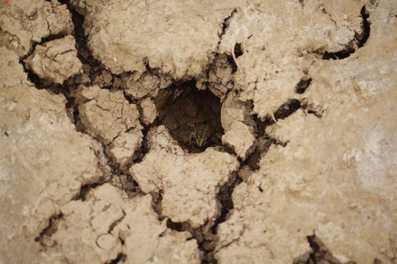 La sécherresse dans le marais ! Imgp1720