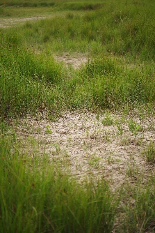 La sécherresse dans le marais ! Imgp1721
