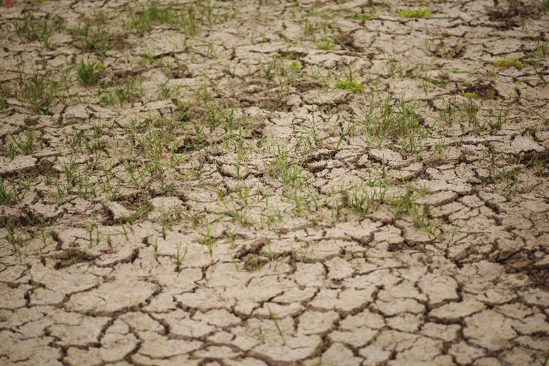 La sécherresse dans le marais ! Imgp1722