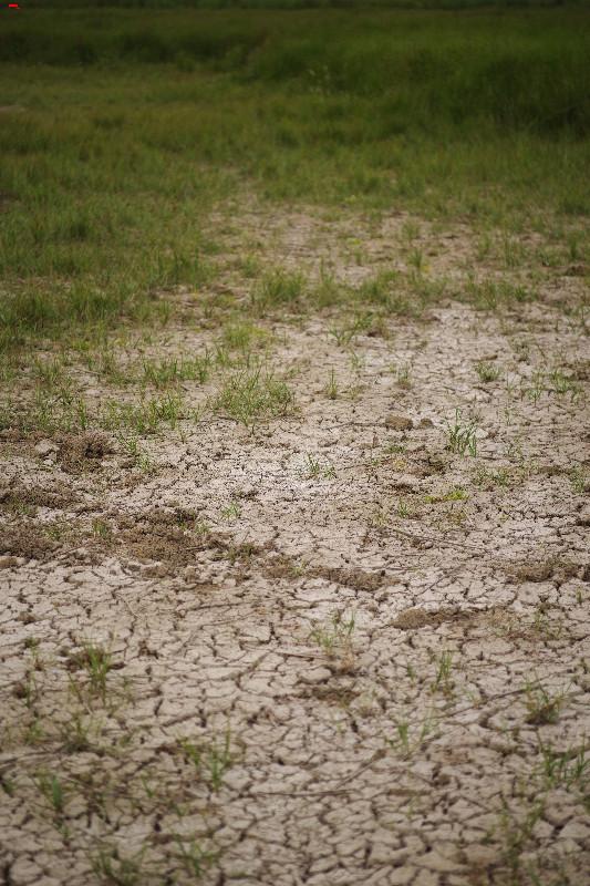 La sécherresse dans le marais ! Imgp1724