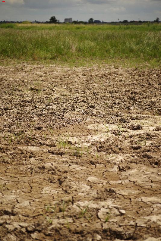 La sécherresse dans le marais ! Imgp1727