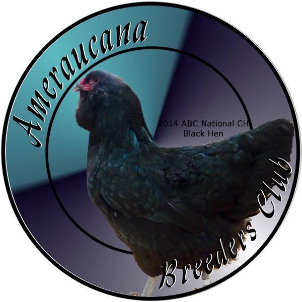 Амераукана, Ameraucana / Easter Egger 13567310