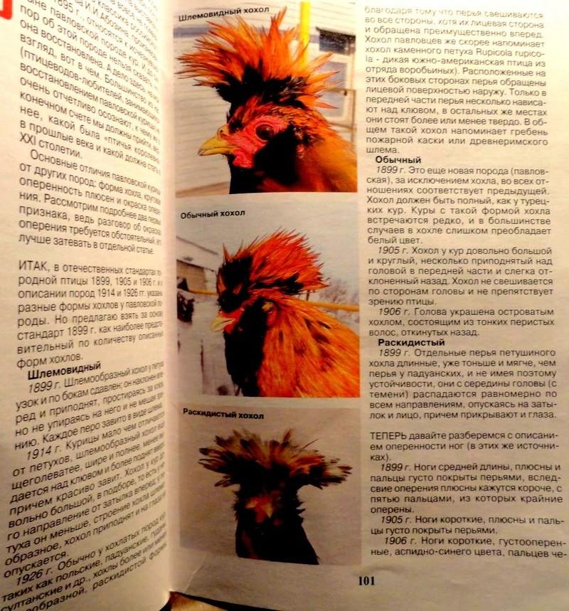 Павловская порода кур - Страница 18 22211310