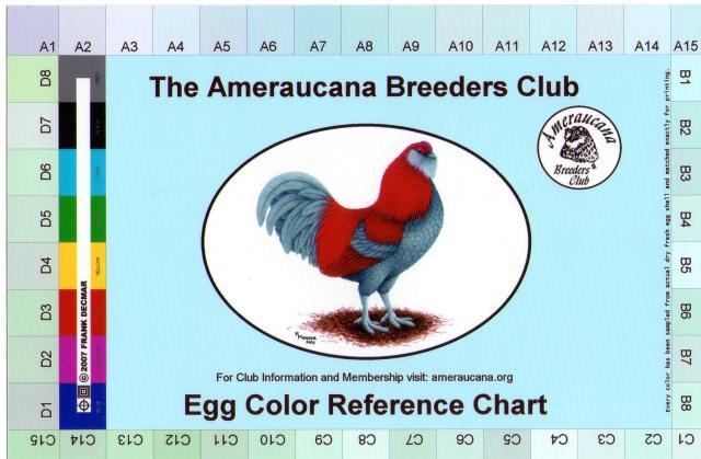 Амераукана, Ameraucana / Easter Egger 6809_i10