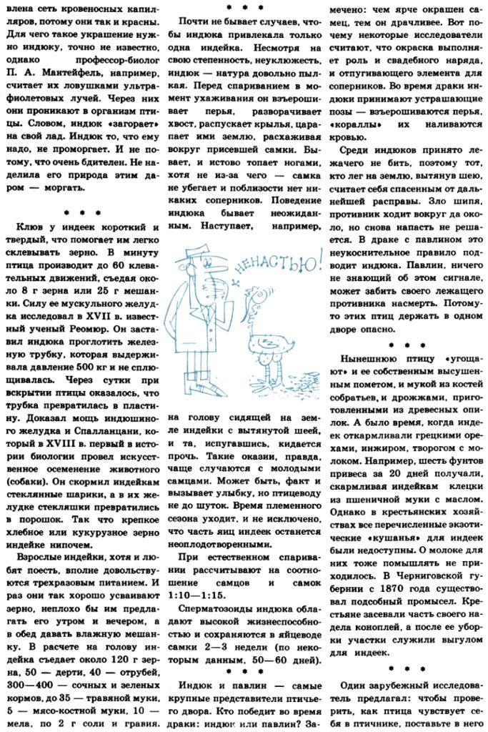 Индюки. Всё о породах и их содержании - Страница 3 Image316