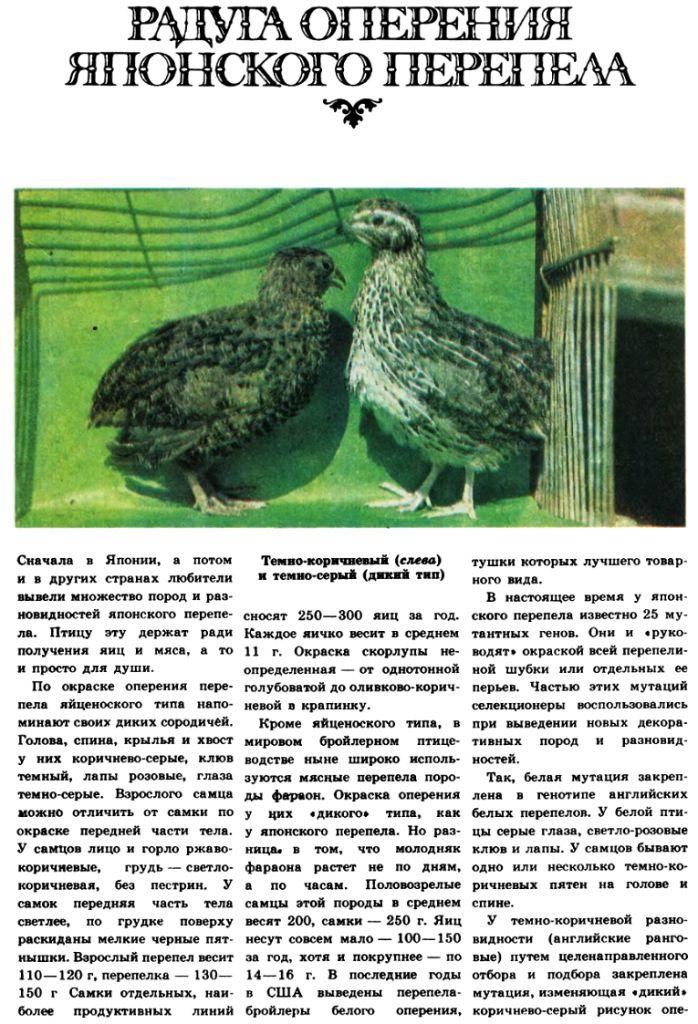 кормление - Разведение перепелов (часть 7) - Страница 19 Image519