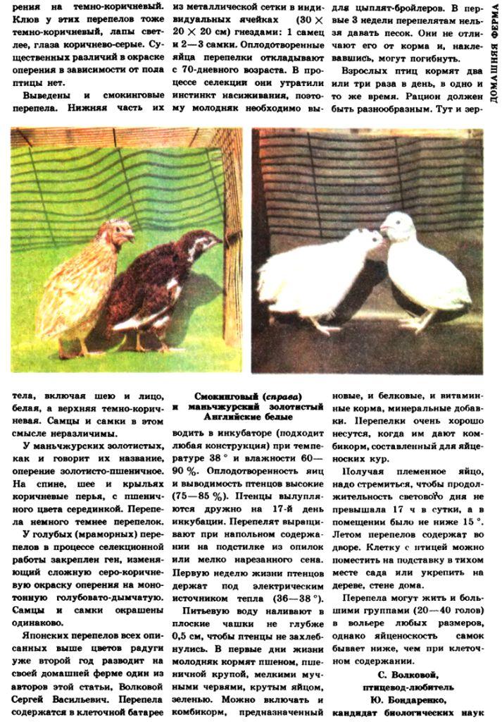 кормление - Разведение перепелов (часть 7) - Страница 19 Image520