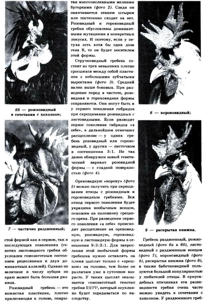 Селекция птиц - Страница 2 Image529