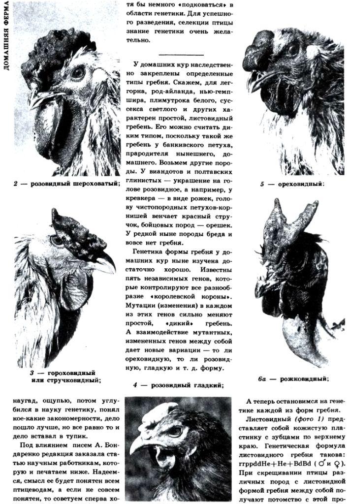 Селекция птиц - Страница 2 Image530