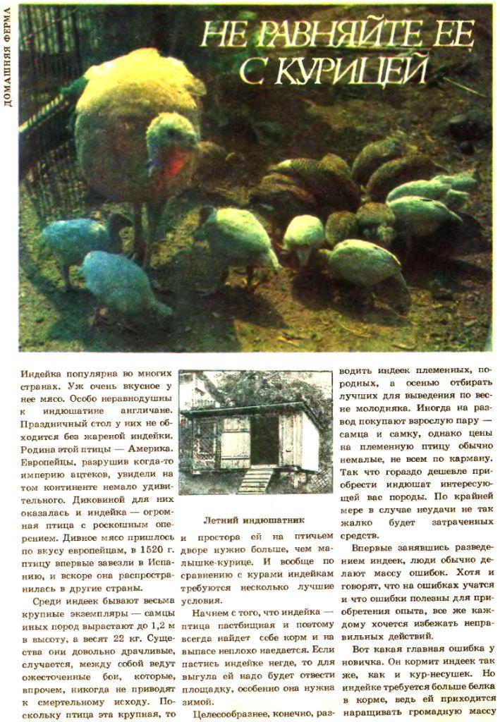 Индюки. Всё о породах и их содержании - Страница 3 Image541