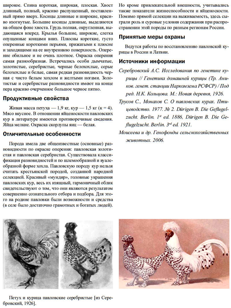 Павловская порода кур - Страница 18 Image571
