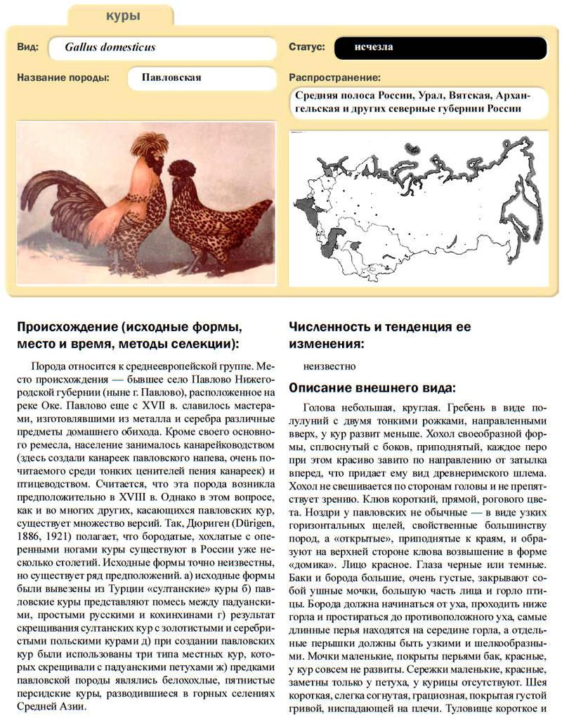 Павловская порода кур - Страница 18 Image572