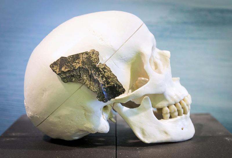 Homo sapiens : notre espèce aurait  plus de 300 000 ans Crane10