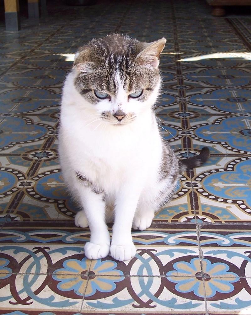 Miss Pretty née en 2011 100_9910