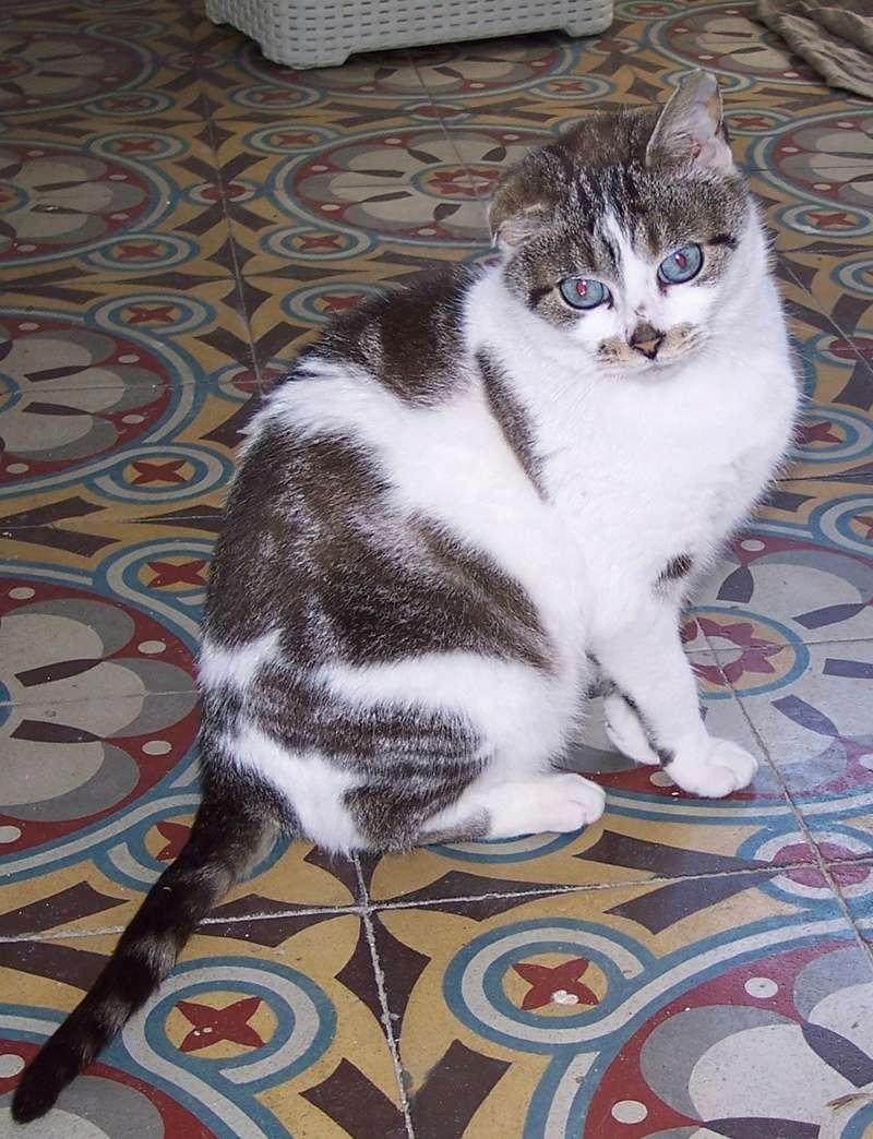 Miss Pretty née en 2011 100_9911