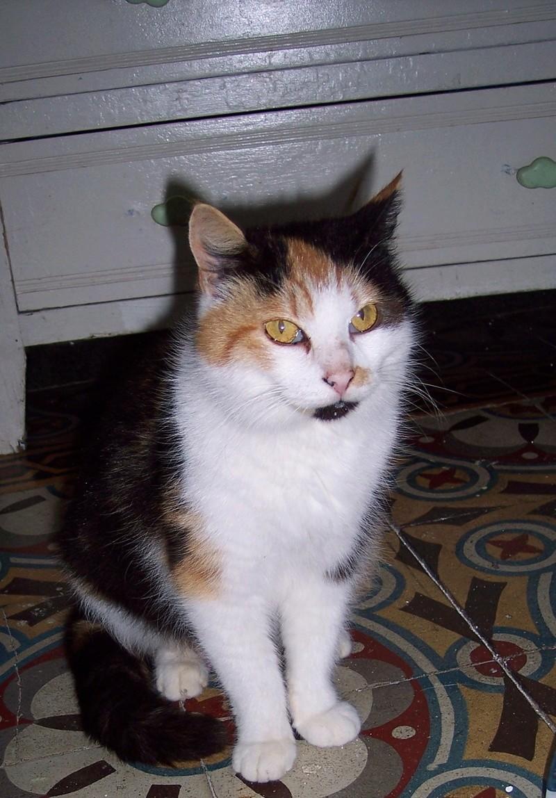 PHIBIE, née en juin 2015 101_0415