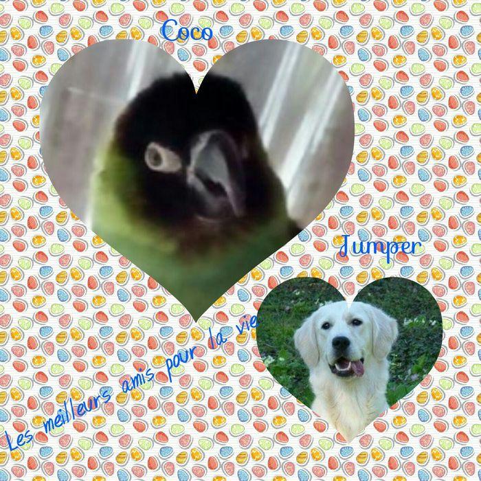 Jumper et son nouvel ami !!! Oiseau10