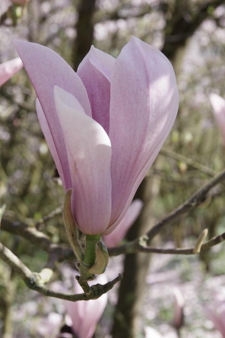 [Fil Ouvert] Fleurs - Page 6 Dsc02013