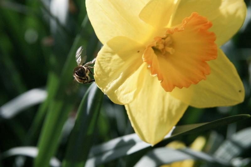 [Fil Ouvert] Fleurs - Page 6 Dsc02015