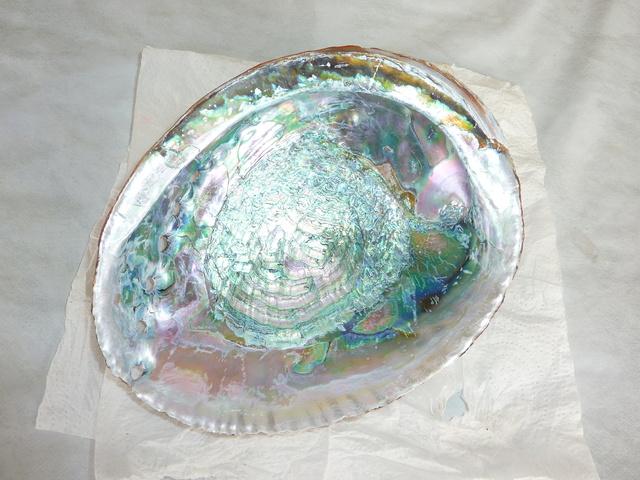 trouvé dans la poubelle du port , P1490011