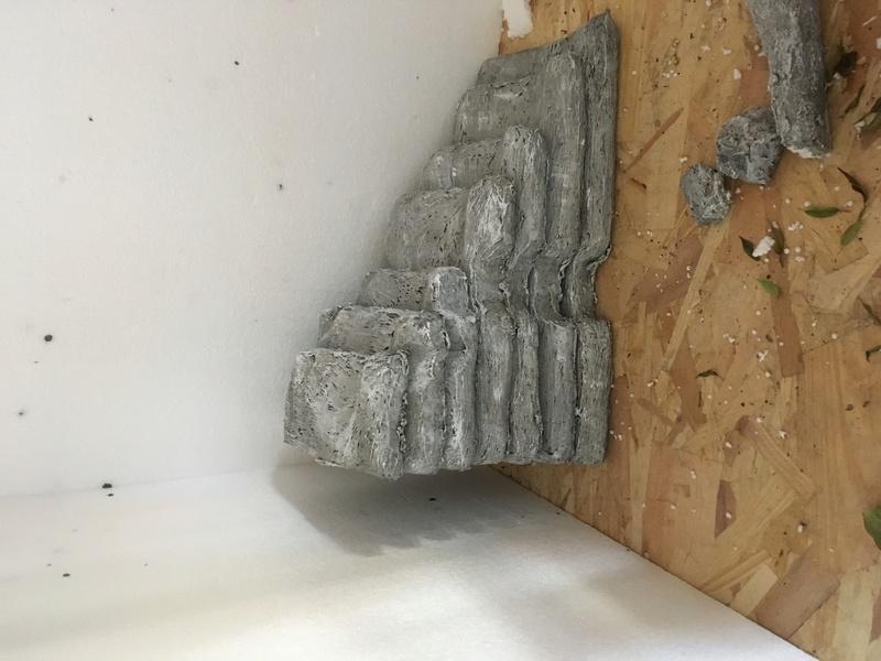 Construction du terrarium de mon physignatus  Img_0111