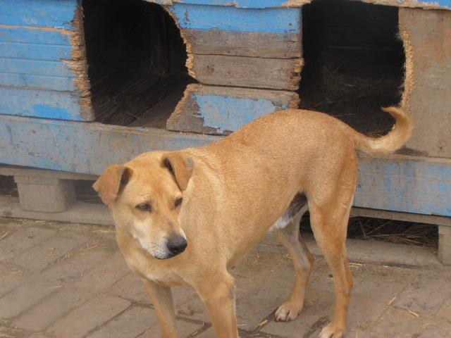 KIMBO - Né 2010 - Timide, il grandit au refuge... - (BELLA) - URGENT : PRET A RENTRER !! - Page 6 Img_3514