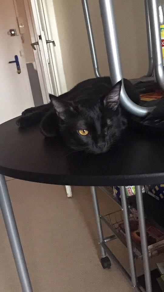 milord - Milord, chaton noir né le 01/05/2016 17498910