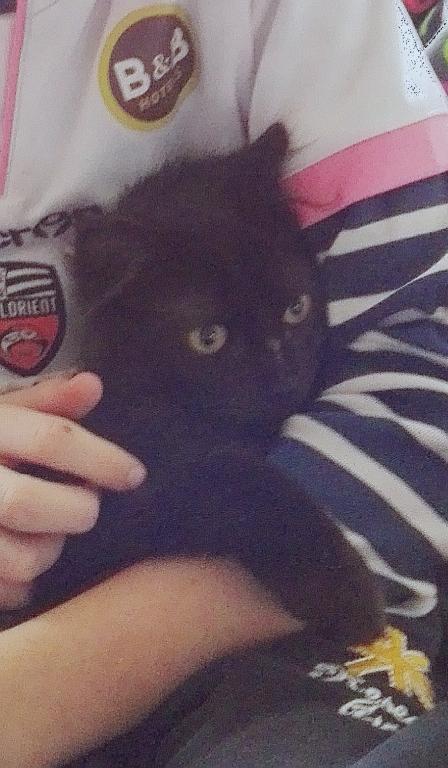 Marvin - MARVIN, chaton européen, robe noire, poils mi-longs, né en octobre 2016. Img_2023
