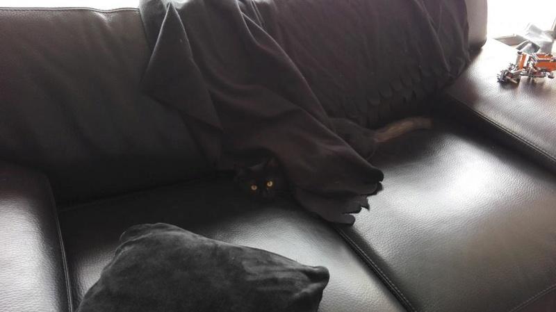 Marvin - MARVIN, chaton européen, robe noire, poils mi-longs, né en octobre 2016. Img_2026