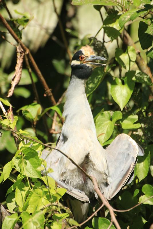 Nature au Costa Rica Img_6410