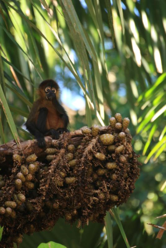 Nature au Costa Rica Img_6510