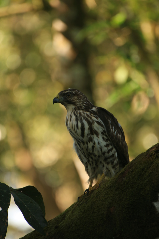 Nature au Costa Rica Img_6511