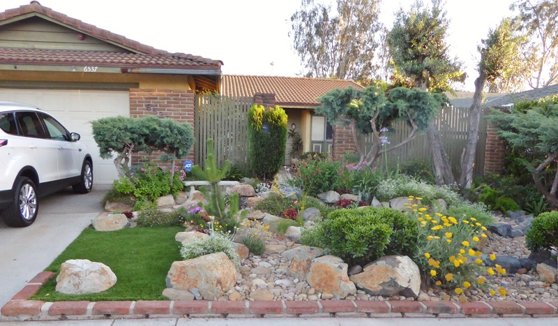 Jimmy's (home of Kohdi and Mishka) Gardening Projects - Page 7 02714