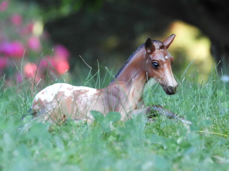 les chevaux de l'écurie Du vieux porche, bienvenue dans ce refuge miniature - Page 7 Dscn0211